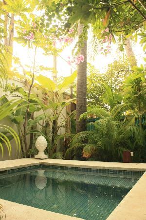 1000+ images about Mediterranean garden on Pinterest