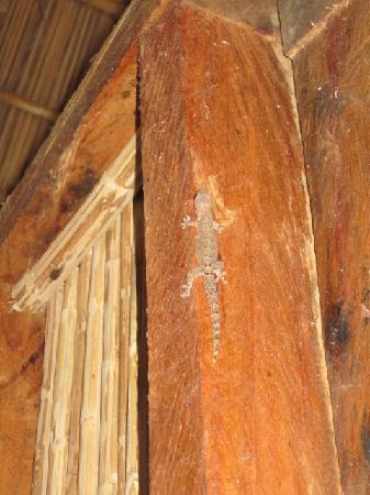 Photos of Yandup Island Lodge, San Blas Islands