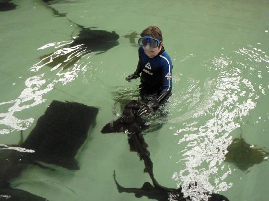 Photos of Australian Shark & Ray Centre, Newcastle