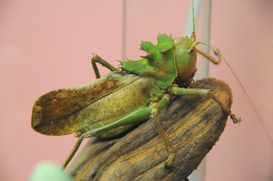 Victoria Bug Zoo British Columbia Hours Address