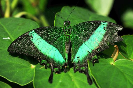 Beautiful Niagara Falls Wallpaper Green Butterfly Picture Of Niagara Parks Butterfly