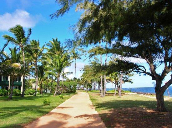 Hotel Coral Reef KauaiKapaa  Hotel Reviews  TripAdvisor