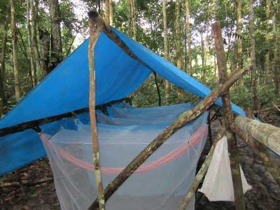 Camping In The Jungle Picture Of Amazon Rainforest