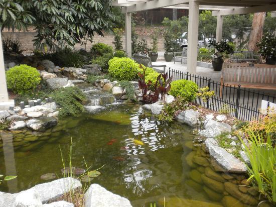 Koi Pond Picture Of South Coast Botanic Garden Palos Verdes Estates Tripadvisor