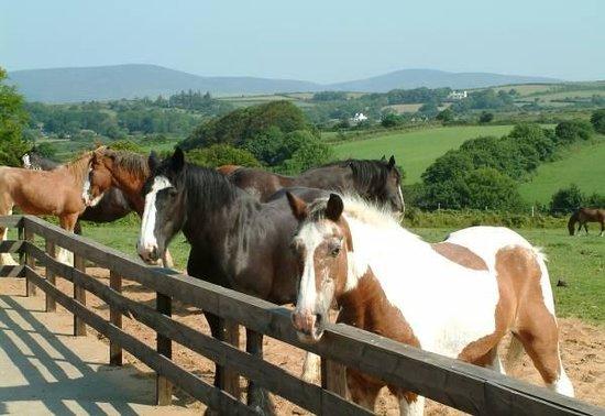https://i0.wp.com/media-cdn.tripadvisor.com/media/photo-s/02/6d/2b/c3/home-of-rest-of-old-horses.jpg