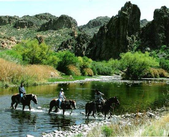 Saguaro Lake Ranch Stable Mesa AZ Hours Address Nature  Wildlife Tour Reviews  TripAdvisor