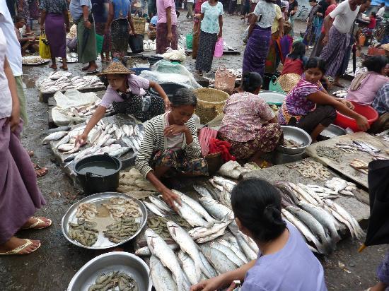 Fish Market Sittwe Myanmar Address Attraction Reviews
