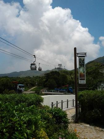心經簡林 - 香港大嶼山的圖片 - TripAdvisor