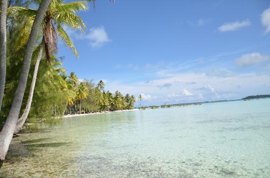 BORA VAITE LODGE Pensione Bora Bora Polinesia francese Prezzi 2018 e recensioni