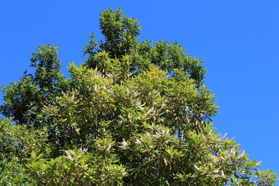 Madeira Fauna  Flora  Funchal  Aktuelle 2018  Lohnt es sich