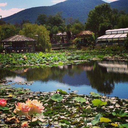 lotus lake - of blue
