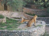 Resultado de imagen de zoo de cordoba