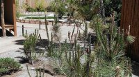 Nice Pond - Picture of Yume Japanese Gardens, Tucson ...