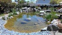 Koi Pond - Picture of Yume Japanese Gardens, Tucson ...