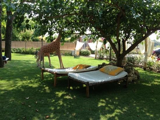 giardino della piscina  Foto di Ca Maddalena Villafranca di Verona  TripAdvisor
