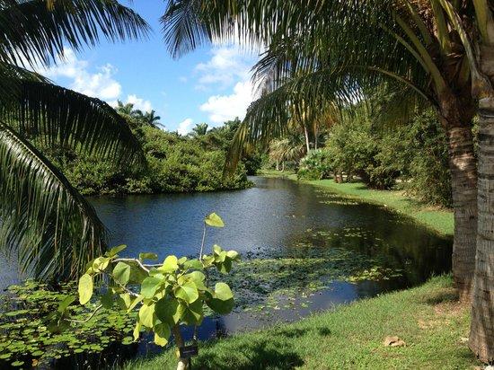 Tripadvisor Cayman Grand