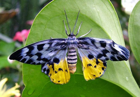 jardin aux papillons vannes tripadvisor
