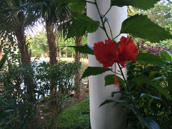 Plants Picture Of Valentin Imperial Riviera Maya Playa