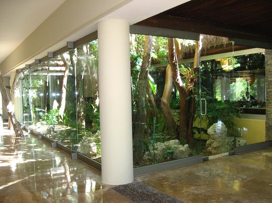 Indoor Jungle At ChakaLucca Picture Of Grand Velas
