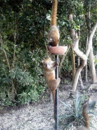Wild Animals Picture Of Valentin Imperial Riviera Maya
