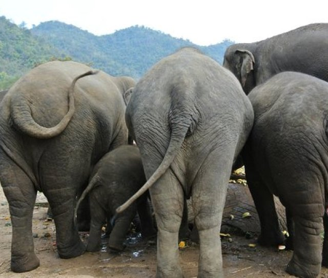 Elephant Nature Park Nice Ass