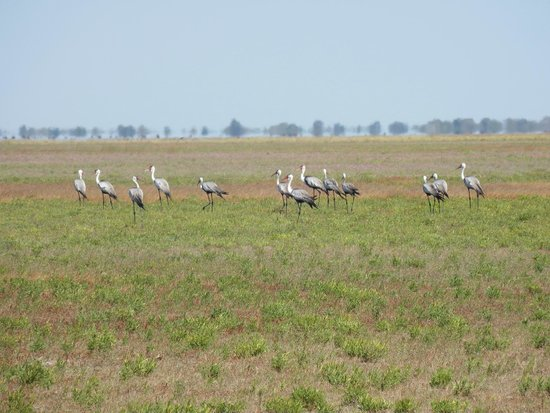 liuwa plain national park