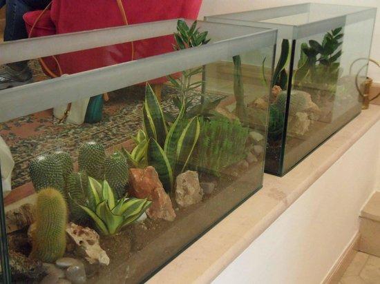 teche piante grasse nella hall  Foto di Hotel Athena