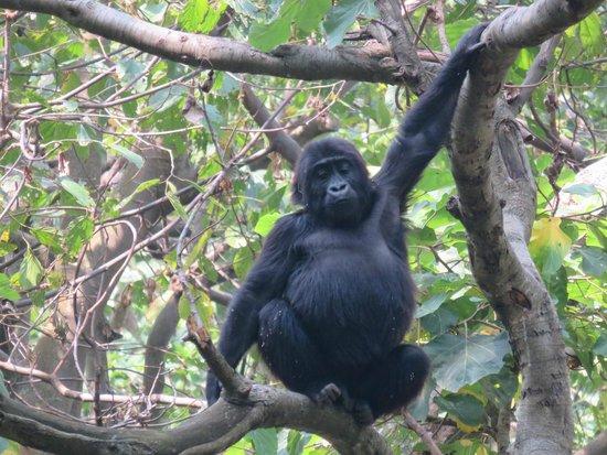 剛果民主共和國照片-非洲剛果民主共和國精選照片 - TripAdvisor