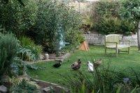 Ducks enjoying the park-like backyard - Picture of Ramsey ...