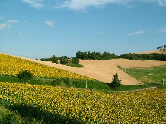 Paesaggio rurale Fattorie Faggioli  Foto di Borgo Basino Civitella di Romagna  TripAdvisor