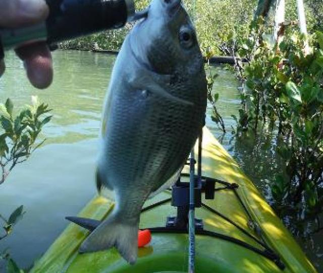 Big4 Koala Shores Port Stephens Holiday Park Fishing 100 M From Your Door