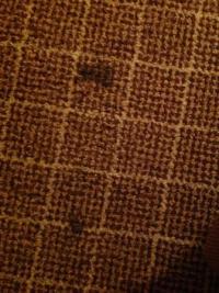 Black stains on carpet - Picture of Ramada Plaza Dayton ...