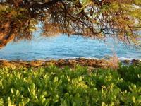 Scenic views - Picture of Paradise Cove Luau, Kapolei ...