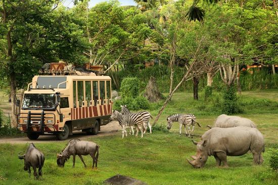 Image result for Bali Safari & Marine Park