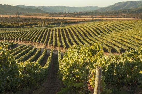 Kingston Family Vineyards Casablanca 2020 All You Need