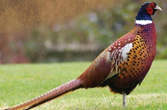 Birds Research Center & Resort (Hambantota) - 2019 All You Need to Know Before You Go (with Photos) - Hambantota. Sri Lanka | TripAdvisor