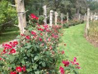 Sonnenburg Gardens & Mansion - rose garden - Picture of ...