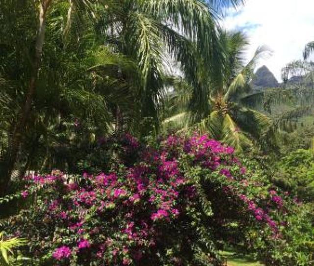 Review Of Angelines Lomi Lomi Massage Anahola Hi Tripadvisor
