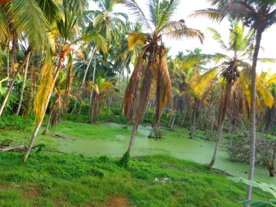 Patrick Villa Kovalam Kerala Hotel Reviews Photos