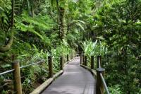 Entrance to Garden on an Incline - Picture of Hawaii ...
