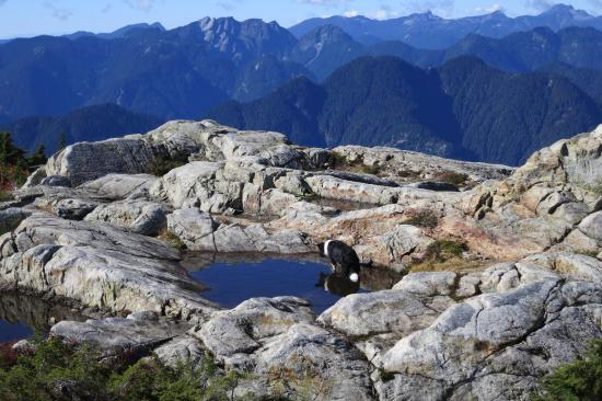 Vancouver's family owned and operated ski resort offering a relaxed west coast feel only 30 minutes from. Peak 3 Mount Seymour Mountain Picture Of Mount Seymour Provincial Park North Vancouver Tripadvisor