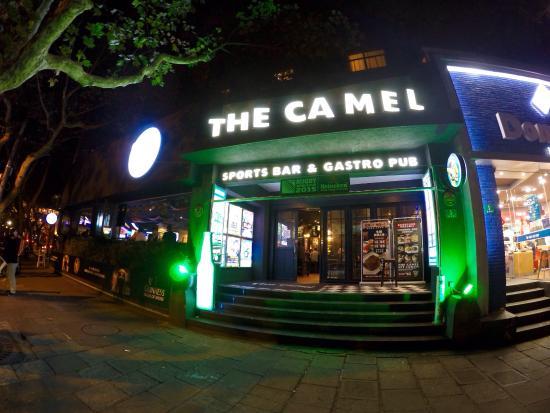 Shanghai Bar Camel