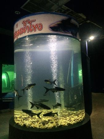 catfish tank picture of