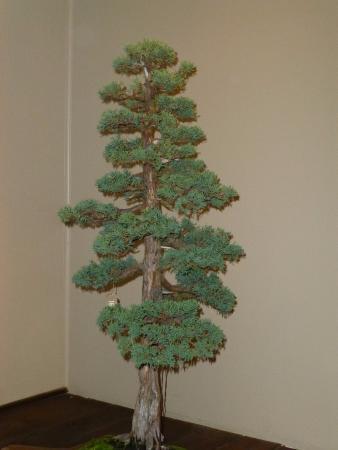 Douglas fir tree   Etsy