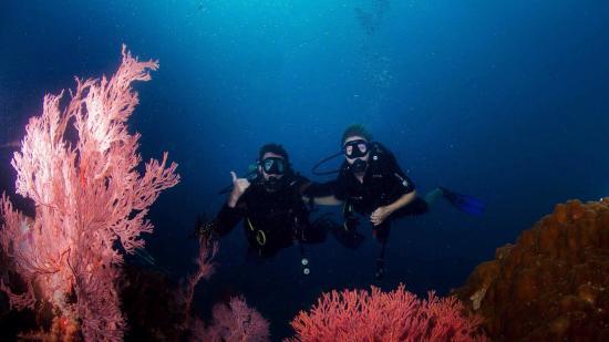 The Top 5 Things to Do Near Bagus Place Retreat Pulau Tioman