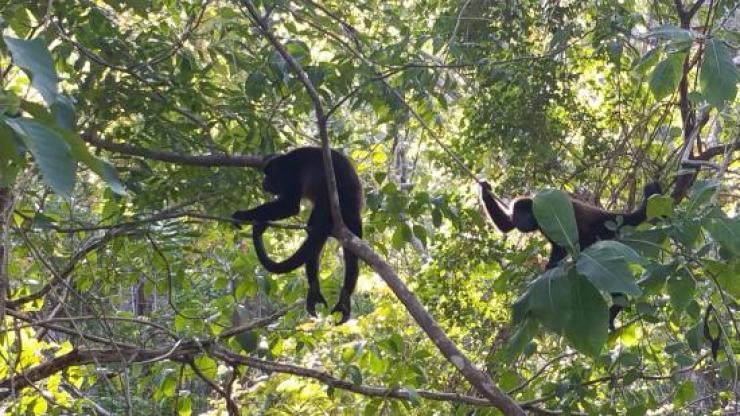 Image result for playita venedo ecological park, panama