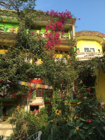 Yoga Class Yogi Ram Pandey Review Of Zen Hotel