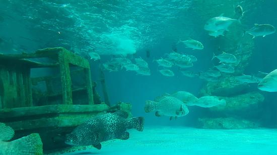 Image result for sunken boat with fish