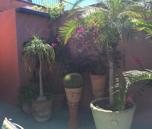 Sandos Finisterra Los Cabos Warm Smell Of Colitas