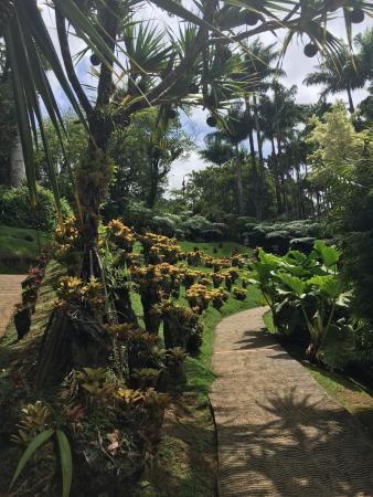 jardin de balata magnifique visite fleurs vegetation parc bien amenage